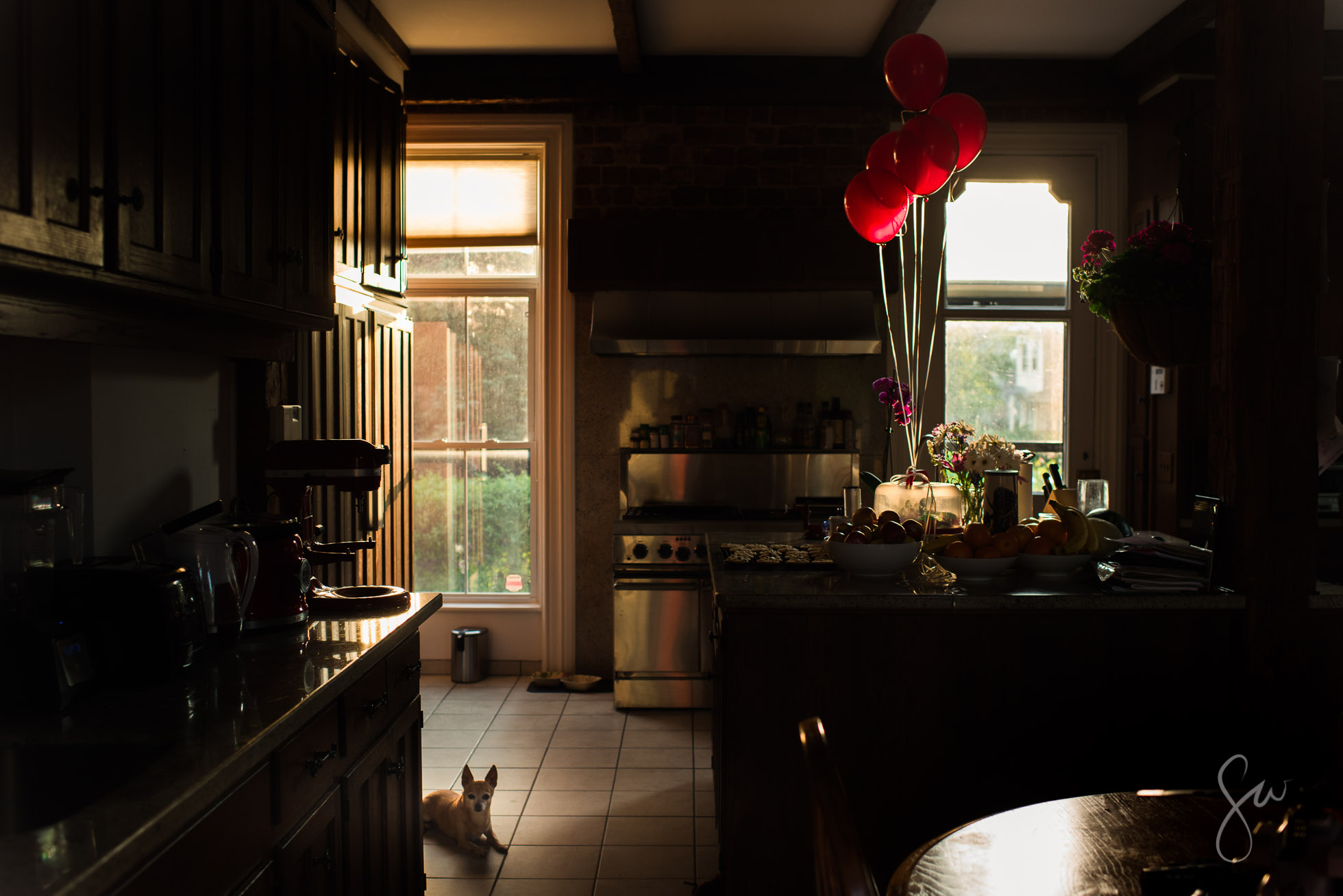 Everyday-Photo-of-Kitchen-in-the-Evening-with-Chihuahua-and-Red-Balloons-by-Sarah-Wilkerson-6513