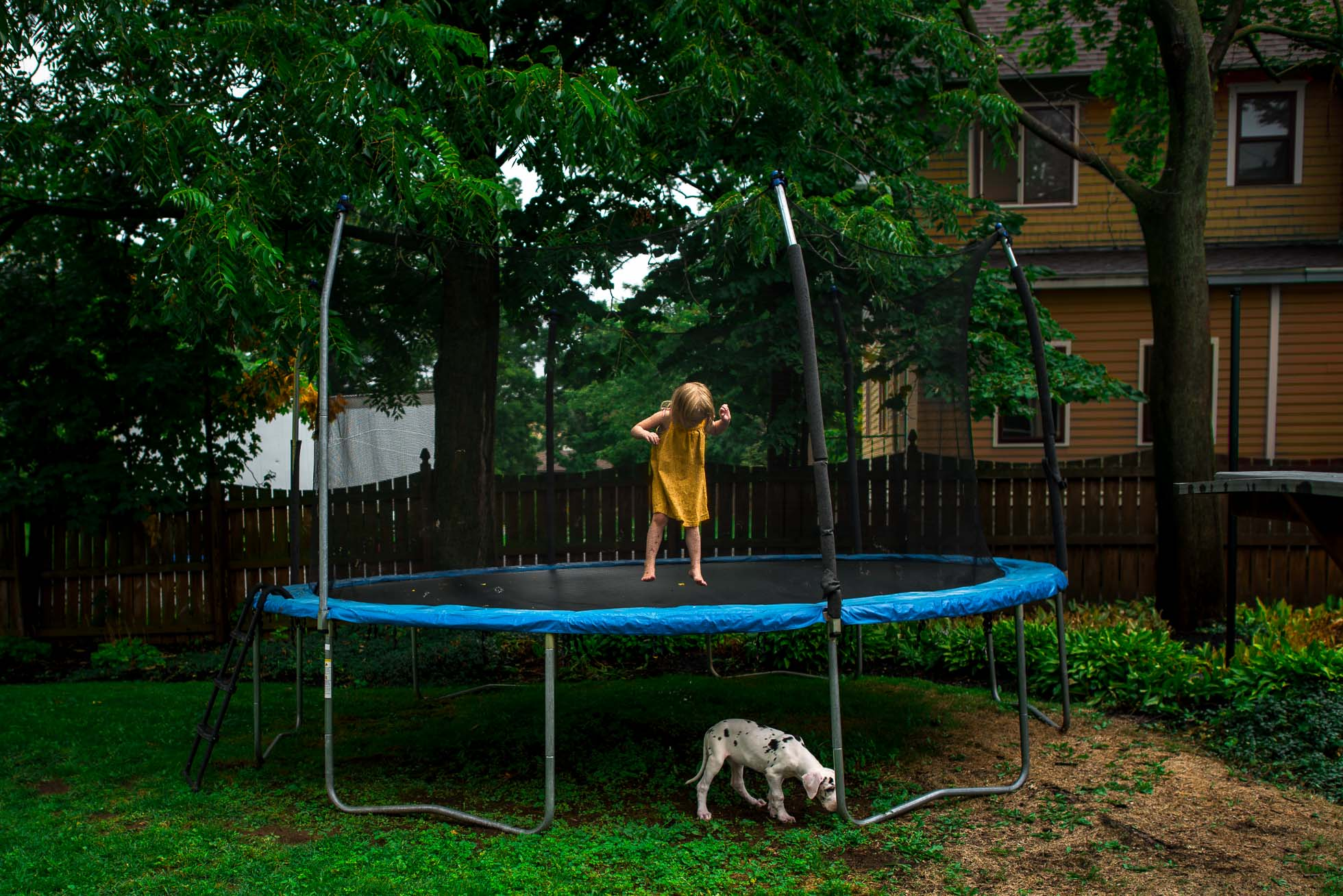 Girl-in-Yellow-Dress-Jumping-on-Trampoline-and-Harlequin-Great-Dane-Puppy-Walking-Underneath-by-Sarah-Wilkerson-