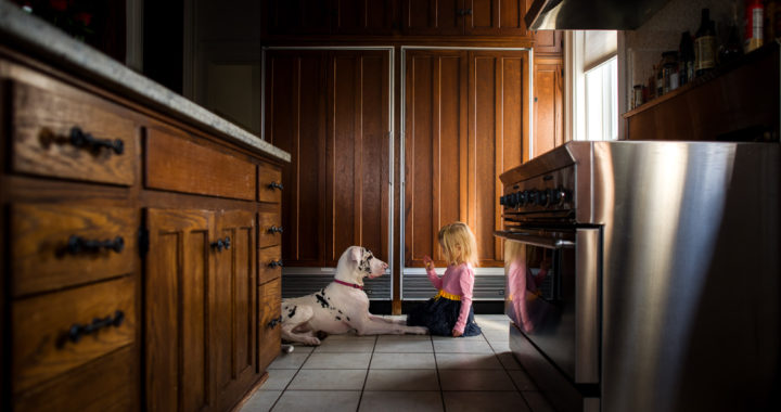 little-girl-teaching-tricks-to-harlequin-great-dane-puppy-in-beautiful-light-by-sarah-wilkerson-4106