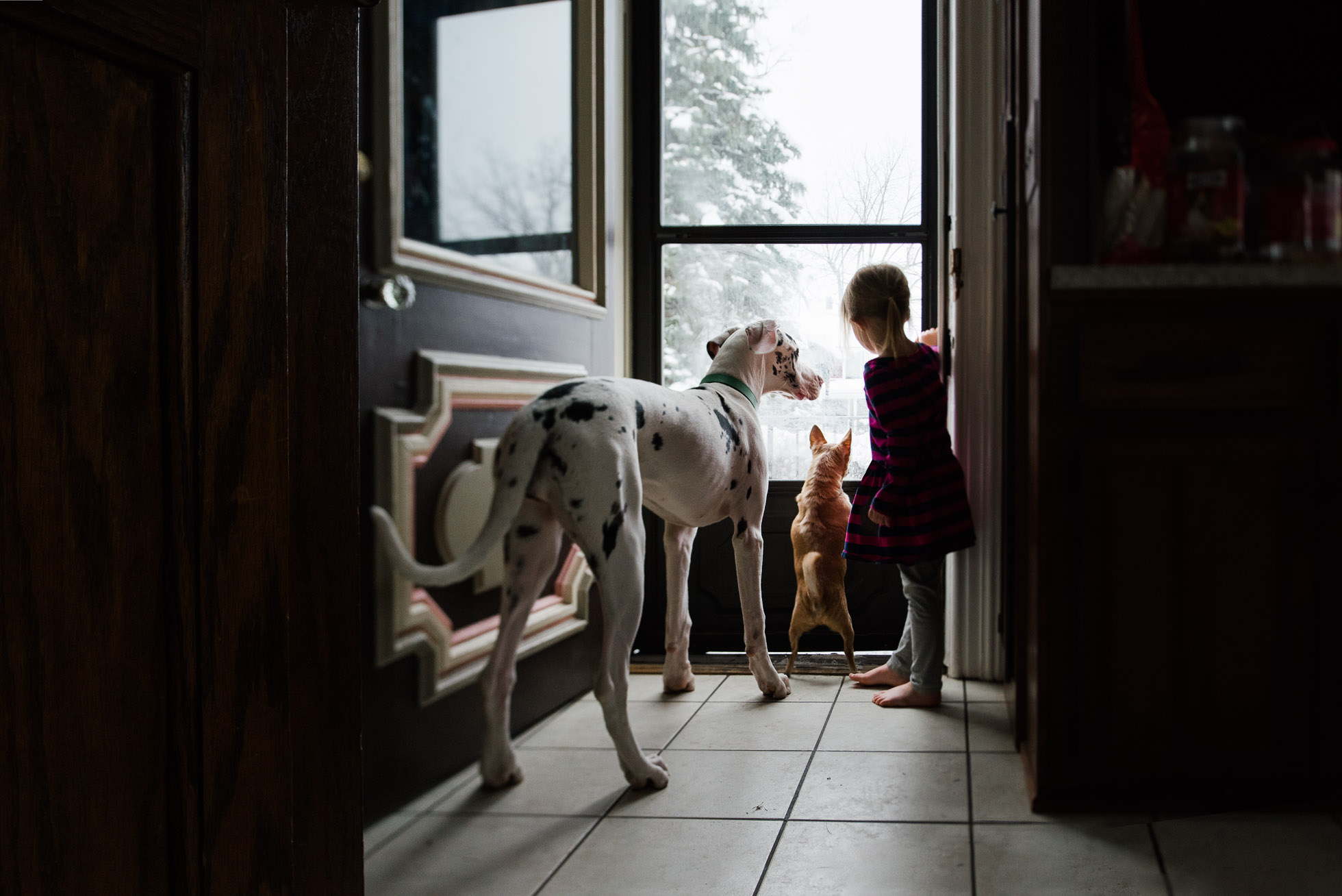 natural-light-environmental-tilt-shift-portrait-of-little-girl-standing-at-door-with-chihuahua-and-harlequin-great-dane-by-sarah-wilkerson
